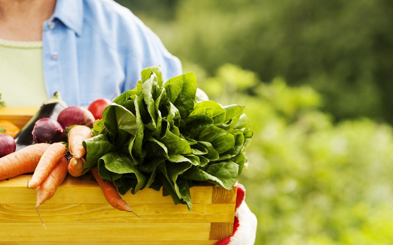 Brasil e alimentos orgânicos - Nutrify