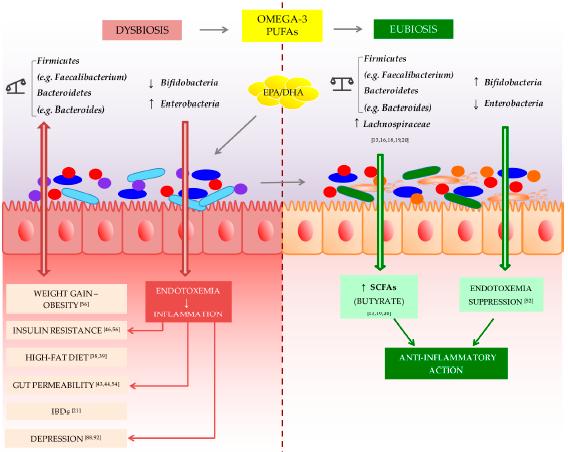 Figura 1 demonstrando a modulação intestinal através da suplementação com ômega 3. (Costantini et al., 2017)