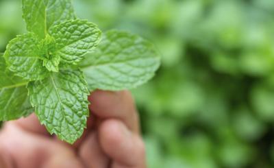 conheca-os-beneficios-de-cultivar-uma-horta-blog-nutrify