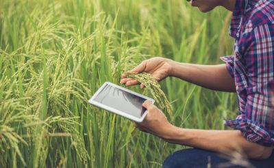 empreendedorismo-verde-soluções-para-um-futuro-sustentável-blog-nutrify