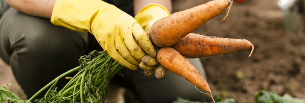 voce-sabe-o-que-agrofloresta-a-gente-te-conta-blog-nutrify