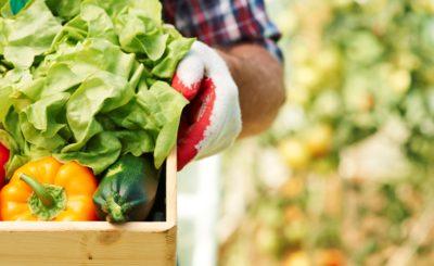 alimentos-organicos-mais-natureza-menos-aditivos-blog-nutrify