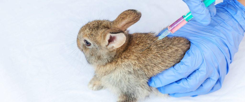 beleza-sem-crueldade-e-possivel-fazer-cosmeticos-seguros-e-eficientes-sem-testar-em-animais-blog-nutrify
