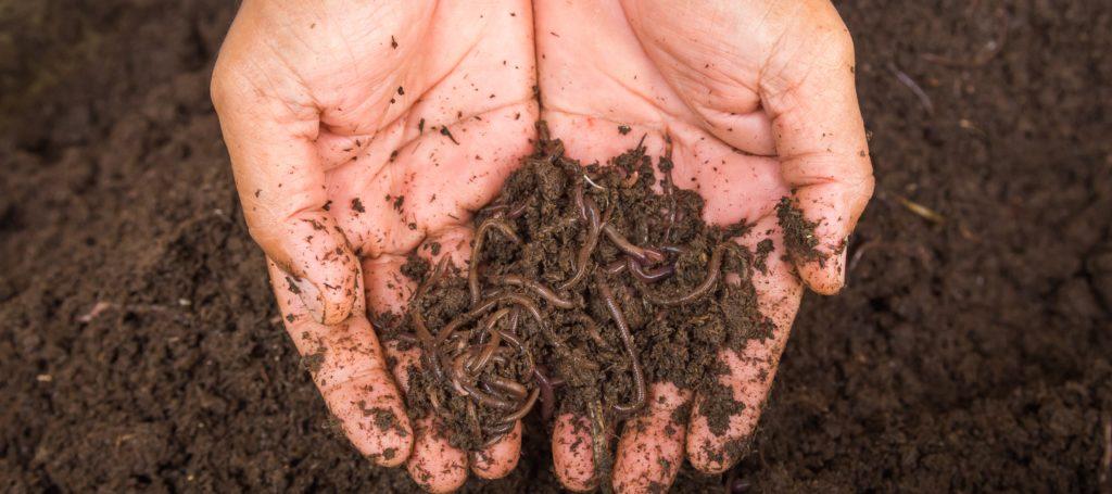compostagem-domestica-como-reduzir-seu-lixo-caseiro-blog-nutrify