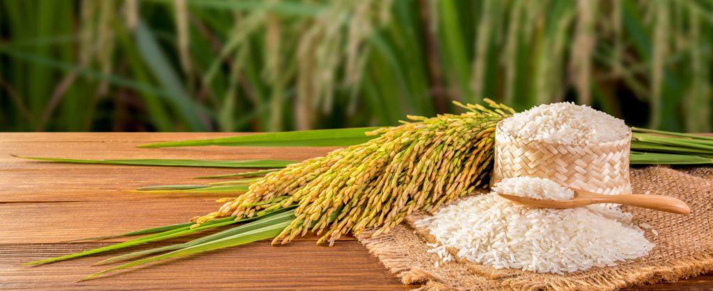 proteina-d-arroz-blog-nutrify