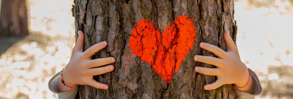 florestas-ameacadas-por-que-voce-deveria-se-importar-blog-nutrify