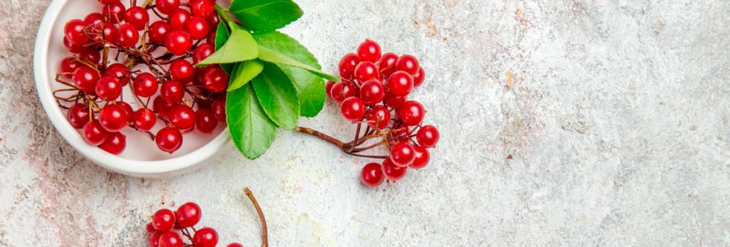 Relação da suplementação de Cranberry na profilaxia da infecção urinária | Blog Nutrify