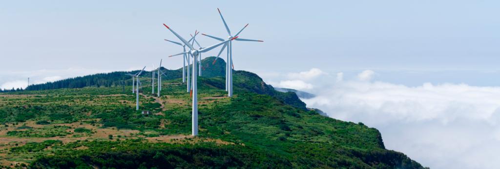 bioeconomia-uma-aliada-da-sustentabilidade-saiba-por-que-blog-nutrify